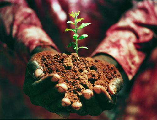 Vi har planterat 60 träd tillsammans!